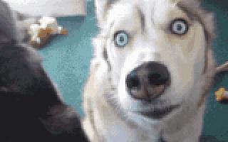 e袋洗送饭遛狗 终极的社区O2O长这样?