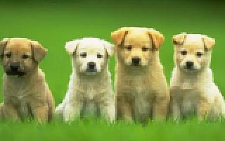 换种姿态玩宠物社交,人人宠的社交O2O之路怎么走?