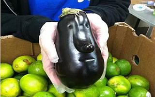 没想到你是这样的蔬菜......