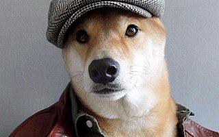 《一条狗的使命》成功逆袭!中国动物题材电影路在何方?