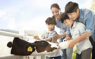 """吴晓波频道加持,结合认养和直播,""""认养一头牛""""要如何做好牛奶生意?"""