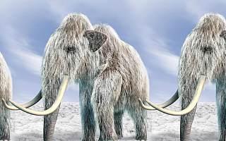 """孩子想看灭绝动物?将来或许可去""""灭绝动物园"""""""