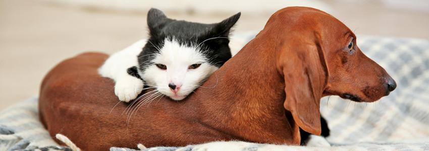 貓狗也瘋狂,千億寵物消費市場正在崛起