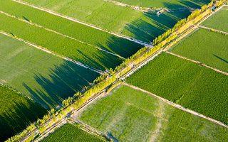 [全球快讯]印度农业科技:创企数量以25%速度增长,3年内或现独角兽