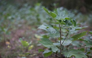 惠普携手世界自然基金会,推出可持续森林合作计划