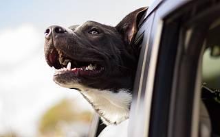 Uber 的最新收费服务让宠物随主人一起乘车