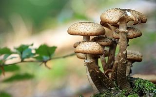 3000亿规模食用菌行业机会挖掘 | 多元化品种,工厂化生产