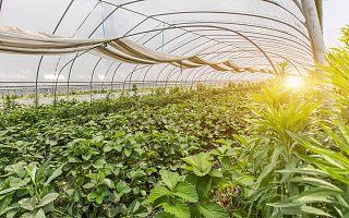 中国农业科学院植物保护研究所徐学农:将科研推向应用,农业创新的市场机会很大