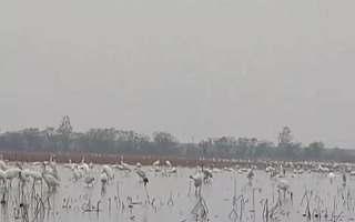"""就在南昌高新区!2019鄱阳湖国际观鸟周:""""全世界离白鹤最近的地方!"""