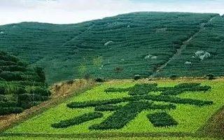 关于促进广西茶产业高质量发展的若干意见