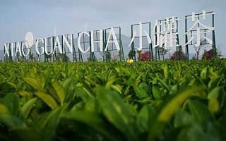 杜国楹:中国茶要想走向世界,必须走创新之路