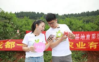 """十荟团打造""""直播""""助农新样本 深入产地助力乡村产业发展"""