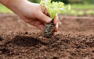 15部委发文促农民工就业创业:灵活就业支持政策与城镇户籍一致