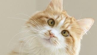 摄图网_501358179_wx_橘猫(企业商用).jpg
