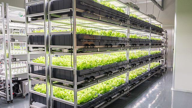 AEssense基于物联网的智能化植物工厂