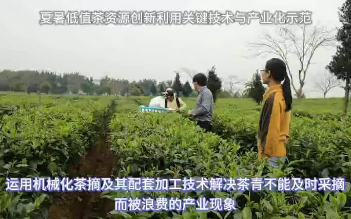 夏暑低值茶资源创新利用关键技术与产业化示范