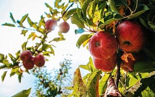 """种水果的""""百果园""""告""""卖水果""""的百果园 启动境外IPO的百果园胜诉"""
