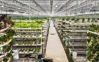 农业农村部:前7月新增1300万留返乡农民工就地就近就业