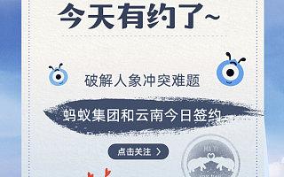 马云七夕帮忙找对象?答案暖了:原来是要去保护亚洲象