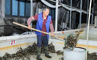 袁隆平题字点赞阿里丰收节!淘宝共卖出225万吨农产品