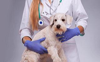 """宠物医疗服务提供商""""新瑞鹏宠物医疗集团""""完成数亿美元战略融资,腾讯领投"""