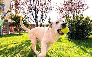 """每5.4秒一场宠物直播,宠物行业出现""""增长潮"""",巨头也跨界入场"""