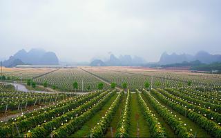 天猫双11已累计助销1406个县域的41万款农产品