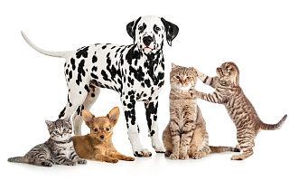 宠物消费市场破2000亿元,天眼查:我国近87%的宠物相关企业成立于5年内
