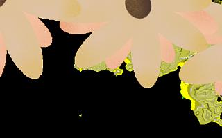 """【团建活动】成都天府新区华阳社区卫生服务中心党支部""""砥砺求实 凝智聚力""""主题团建活动"""