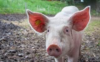 猪肉降价后股价下跌 养猪巨头温氏股份原总裁违规减持被监管