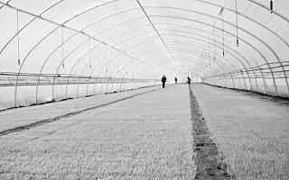河南公布农业产业化省重点龙头企业名单,多家上市公司在列