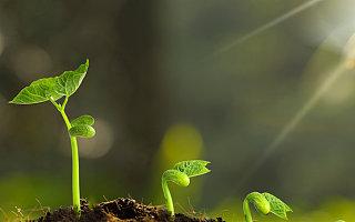 [创头条政策月报]中央一号文力推农业农村现代化,多地政策聚焦科技创新