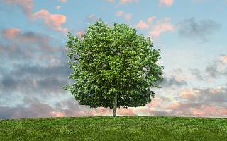 东珠生态称有21个森林项目在建 2020年新项目金额下滑