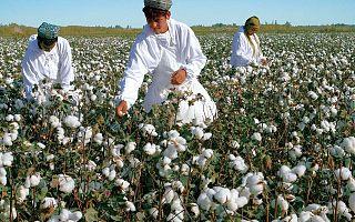 """当全球经济失去中国""""新疆棉"""""""