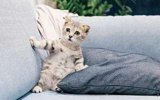 宠物氪金养肥了Chewy,但实现一个亿的盈利小目标很难么?