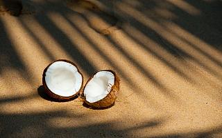 椰树集团为何独爱黑体字和大胸妹?原来是董事长亲自设计