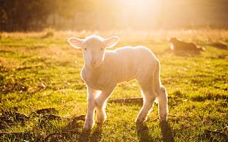 红星美羚转战创业板 羊奶质量问题多发被罚款