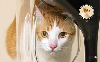 """猫主子也能体验的""""喵脸识别"""",背后竟有这么多秘密!"""