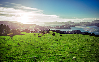 第八大洲环游记(三):人间胜境新西兰,AI孤岛or方舟?