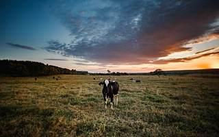 优然牧业通过港交所聆讯 为伊利最大的原料奶供应商