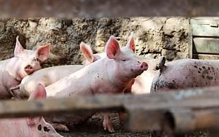 猪价持续下跌 傲农生物上半年预计亏损1.20亿元